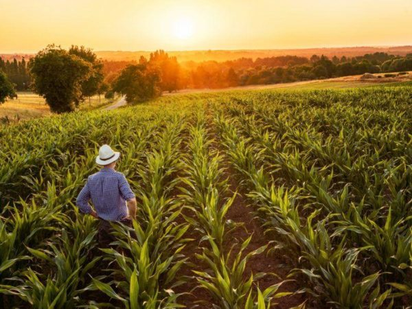 Use Biopesticides in Agriculture